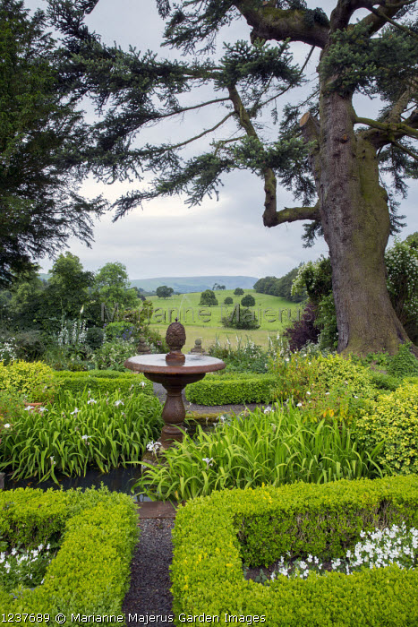 Abies cephalonica, stone water fountain in centre of box parterre, irises, view across countryside, Abies cephalonica