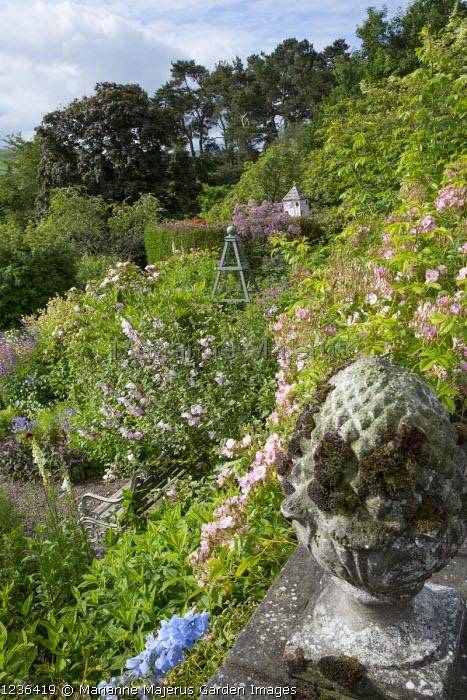 Sloping hillside garden, roses, stone finial, bench, Lavatera x clementii 'Barnsley'