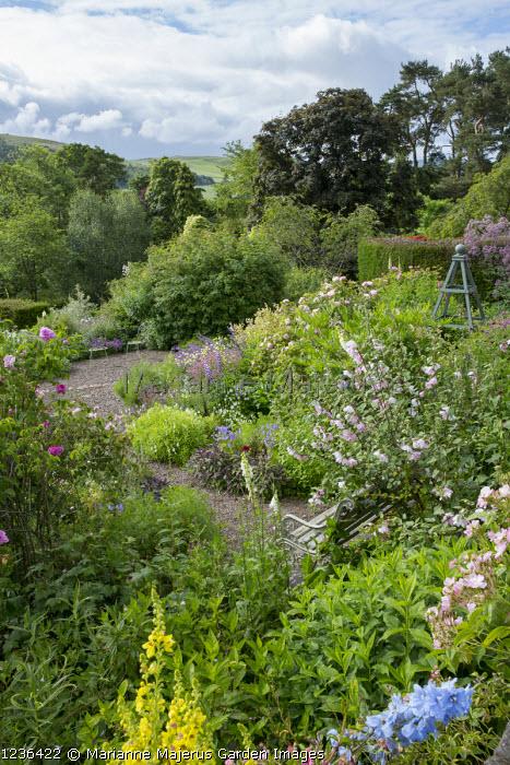 Hillside garden, roses, bench, wooden obelisk, Lavatera x clementii 'Barnsley'