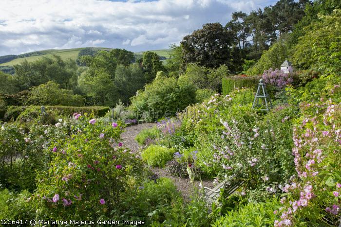 View across rose garden towards landscape, bench, Rosa virginiana, Lavatera x clementii 'Barnsley'