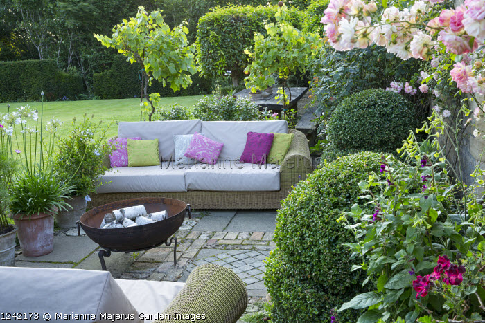 Rosa 'Phyllis Bide', standard grape vine, Vitis 'Triomphe d'Alsace', and agapanthus in terracotta pots, outdoor sofas with cushions by brazier, box topiary