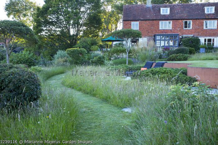 Mown path through long grass meadow, contemporary chairs on terrace, Pinus mugo var. mughus