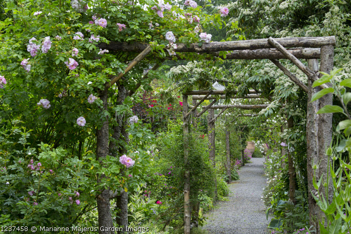 Avenue of wooden rose arches