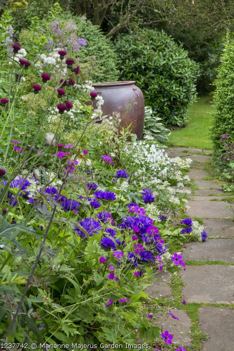 Campanula, geraniums, cirsium, astrantia and thalictrum, large urn