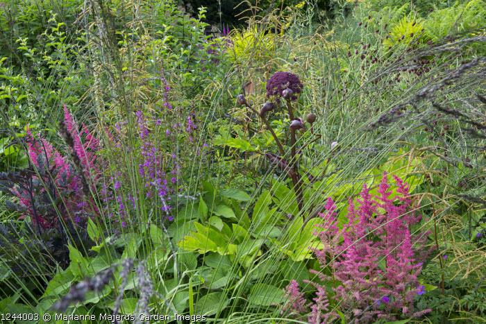 Molinia caerulea subsp. arundinacea 'Black Arrow', Angelica gigas, Astilbe 'Granat', Aruncus 'Horatio', sanguisorba