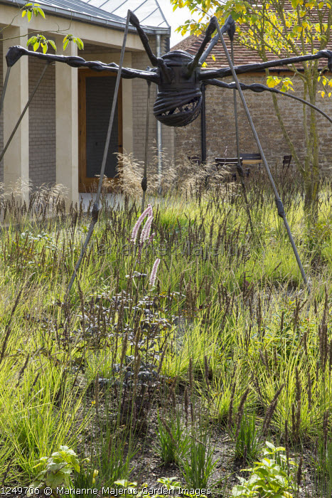 Courtyard with spider sculpture by Louise Bourgeois, Sesleria autumnalis and Molinia caerulea subsp. caerulea 'Moorhexe', Actaea simplex 'Prichards Giant'