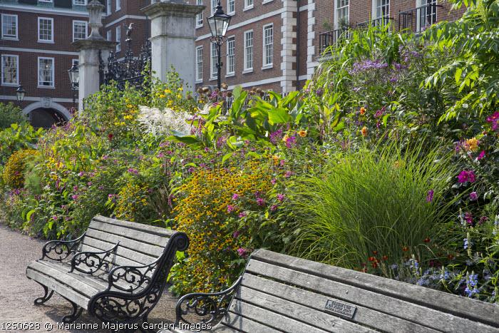 Rudbeckia triloba, Persicaria orientalis, Vernonia crinita 'Mammuth', miscanthus, wooden benches