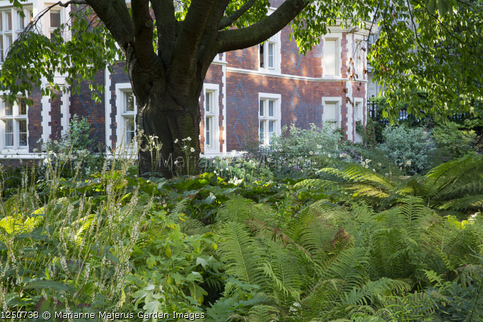 Ferns and persicaria under tree