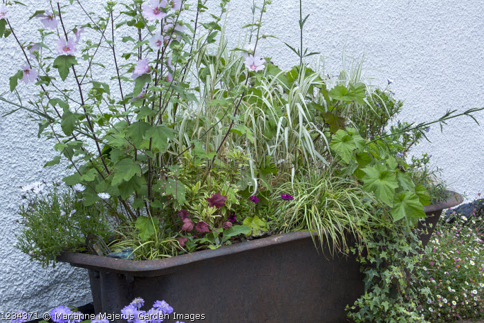 Salvaged metal bath trough used as a planter
