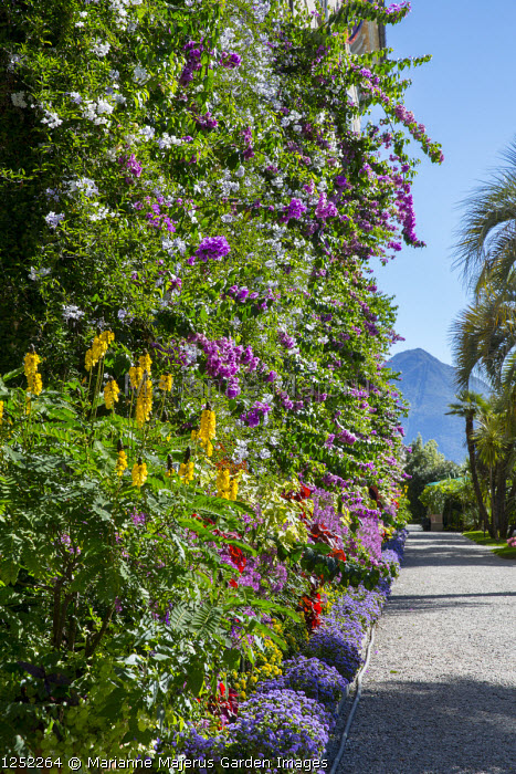 Bougainvillea and solanum growing against house wall, gravel terrace, view to the Alps