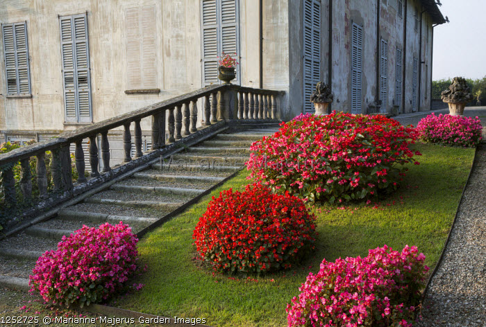 Begonia on sloping grass bank, stone steps and balustrade