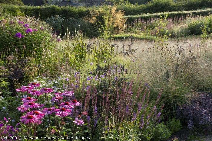 Echinacea purpurea 'Pink Glow', Salvia x sylvestris 'Dear Anja', Sanguisorba officinalis 'Red Buttons', Molinia caerulea subsp. caerulea 'Poul Petersen', Stipa gigantea