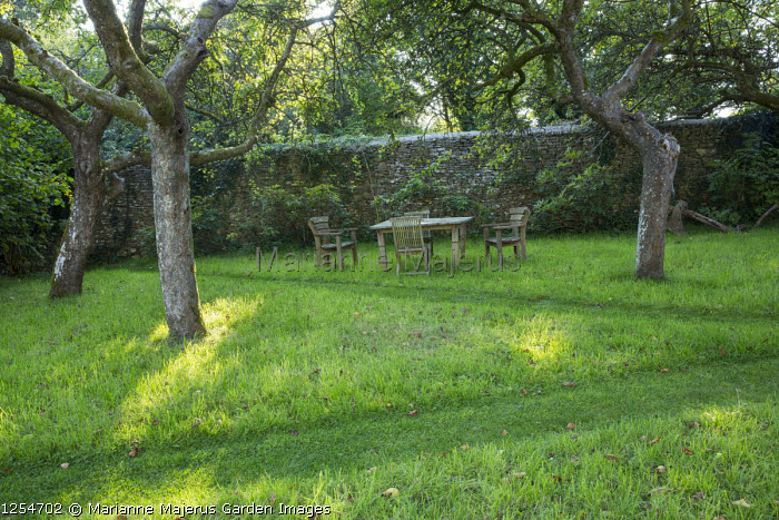 Mown paths through lawn in orchard, table and chairs