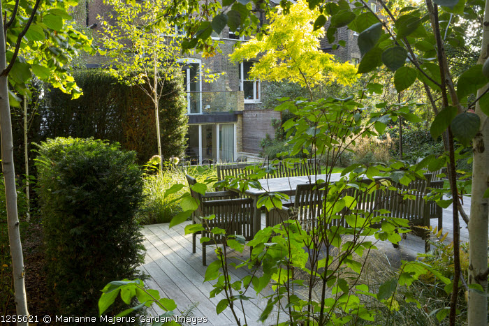 Table and chairs on decking, yew hedge, Cornus sanguinea
