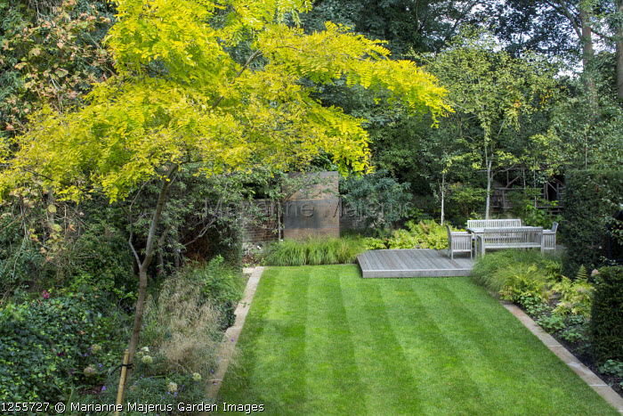 Overview of autumnal town garden, formal rectangular lawn edged with stone, Robinia pseudoacacia 'Frisia'