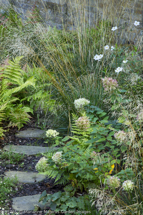 Stepping stones through border, Deschampsia cespitosa, Anemone x hybrida 'Honorine Jobert', Dryopteris erythrosora, Hydrangea paniculata 'Limelight'
