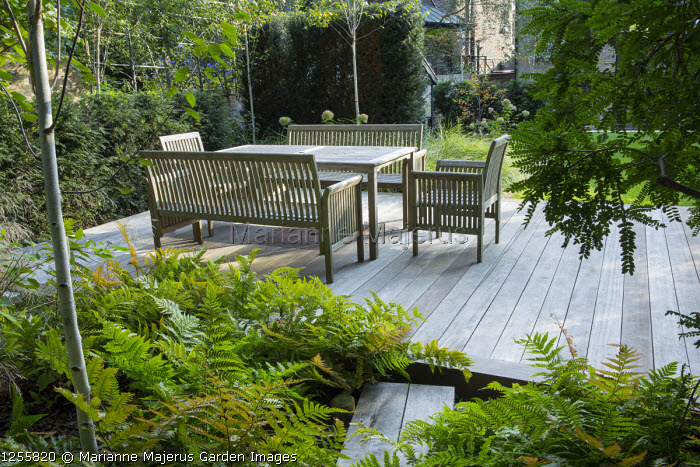 Wooden table and chairs on decking, Dryopteris erythrosora, yew hedge screen