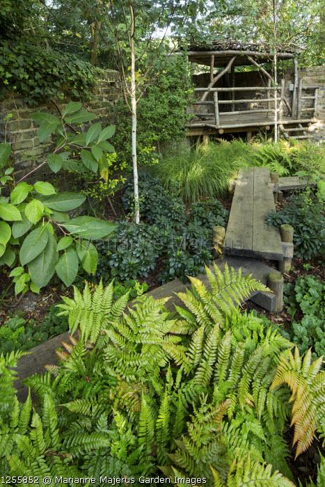 Oak boardwalk through shady garden, treehouse, Dryopteris erythrosora, Betula utilis var. jacquemontii, Euphorbia amygdaloides var. robbiae