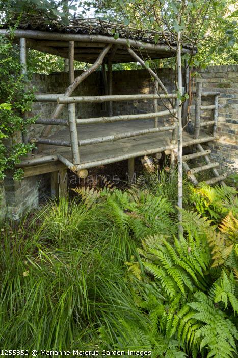 Wooden treehouse, Dryopteris erythrosora, Betula utilis var. jacquemontii, Anemanthele lessoniana