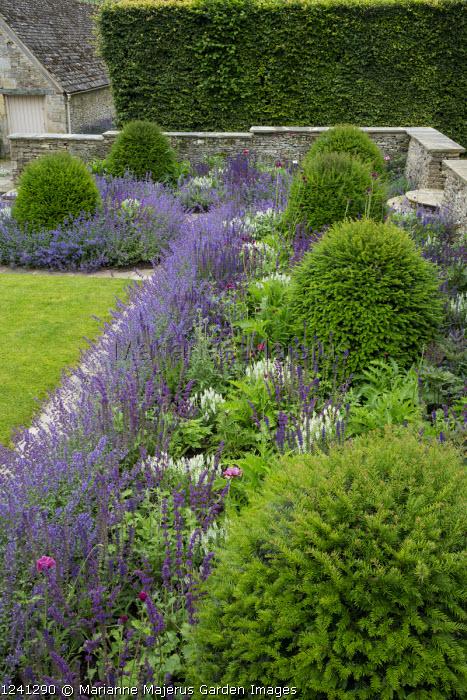 Nepeta racemosa 'Walker's Low' border edging, Taxus baccata domes, Salvia x sylvestris 'Schneehügel', Salvia verticillata 'Purple Rain', stone mowing strip and walls