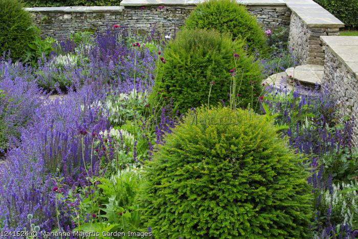 Nepeta racemosa 'Walker's Low' border edging, Taxus baccata domes, Cirsium rivulare 'Atropurpureum', Salvia x sylvestris 'Schneehügel', Salvia verticillata 'Purple Rain', stone walls and steps