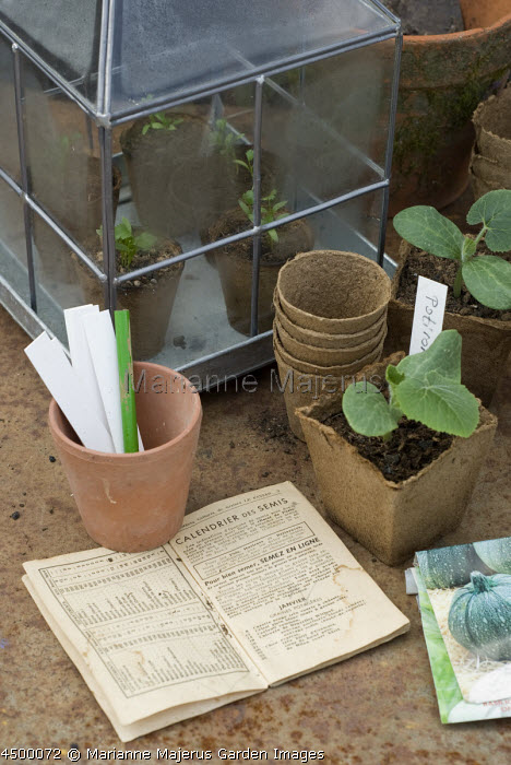 Pumpkin seedlings in biodegradable coir pots on potting bench, labels, small cloche greenhouse