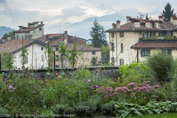 Hylotelephium (Herbstfreude Group) 'Herbstfreude' syn. sedum and Verbena bonariensis, cordon-trained tomatoes, view across Italian town, Rosa 'John Clare'