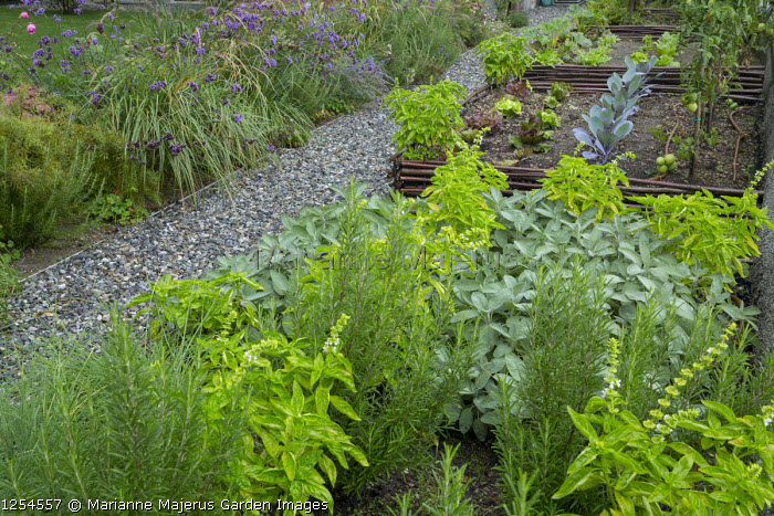 Herb border, woven willow-edged raised bed
