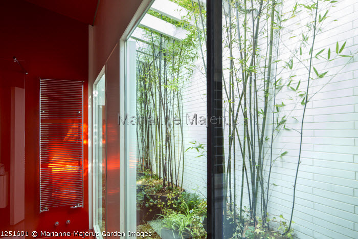 Internal courtyard, white painted wall, view from inside, Phyllostachys nigra