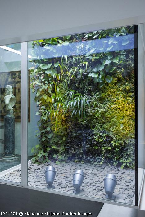 Living green wall in internal atrium, Begonia grandis subsp. evansiana, Bergenia cordifolia, Iris japonica, Sarcococca confusa, Ficus pumila 'Sunny', Hedera hibernica, Saxifraga stolonifera