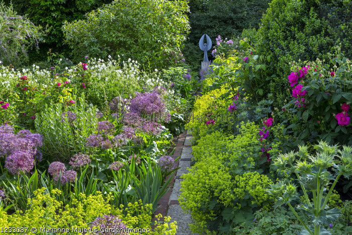 View along path to Angel sculpture by Pete Moorhouse, Rosa 'Henri Martin', Allium cristophii, drift of Alchemilla mollis, Rosa gallica var. officinalis
