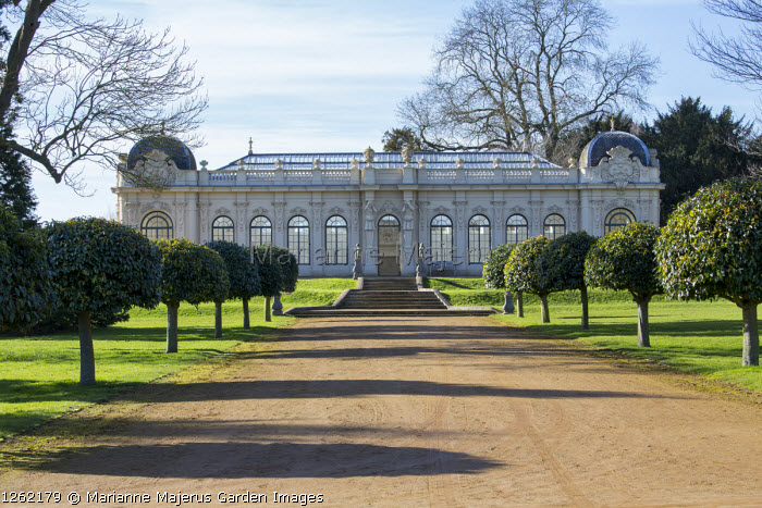 Wide path flanked with lollipop trained Portuguese laurels leading to Orangery