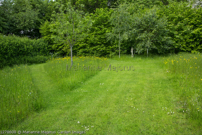 Mown lawn and path in wildflower area