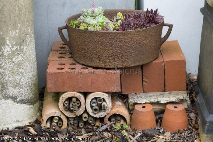Sempervivums in metal pot on insect 'hotel', wildlife habitat