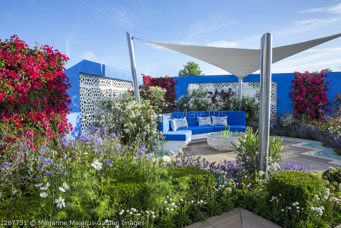 Sunsail over mediterranean-style garden, blue cushions on built-in bench, decking, white aluminium panels set in blue painted wall with living green Bougainvillea 'Barbara Karst' walls, Nerium oleander 'Album', Cosmos bipinnatus 'Purity'