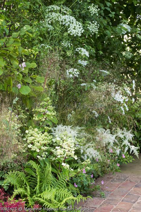 Hydrangea, astilbe, ferns, Ammi majus
