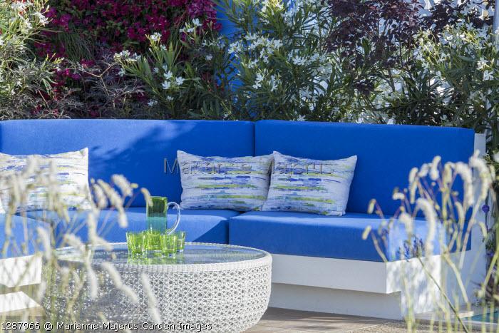 Blue cushions on built-in sofa, Nerium oleander 'Album'