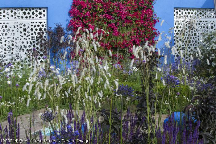 Mediterranean-style garden, white aluminium panels in blue painted wall with living green Bougainvillea 'Barbara Karst' wall, Sanguisorba tenuifolia var. alba, Salvia nemorosa 'Caradonna'