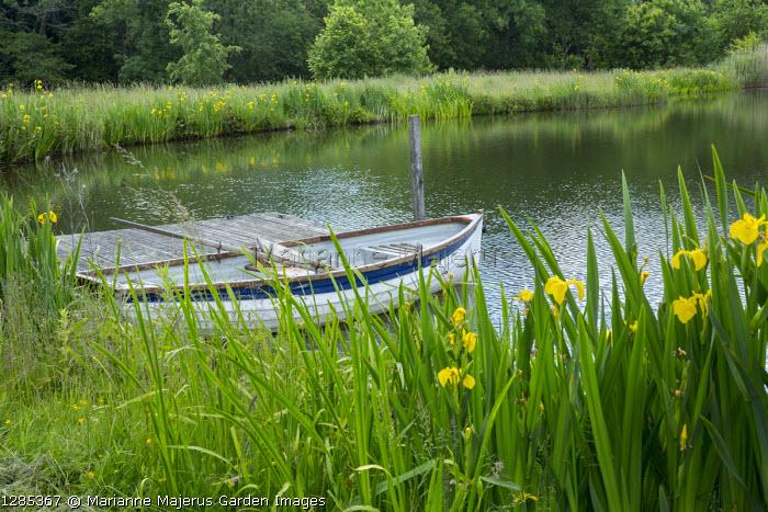 Iris pseudacorus on edge of lake, timber deck jetty, rowing boat