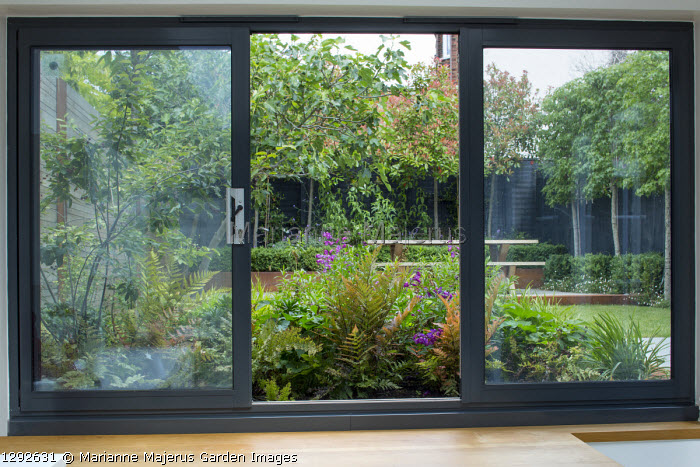 View from inside house through sliding windows to contemporary urban garden outside, Dryopteris erythrosora