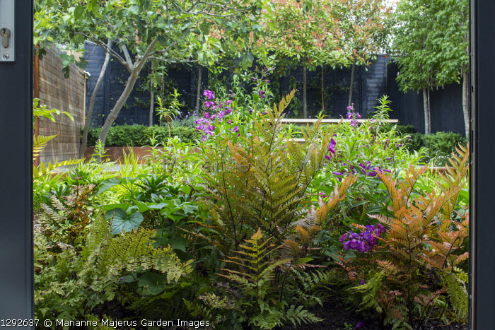 View from inside house through sliding windows to contemporary urban garden outside, Dryopteris erythrosora