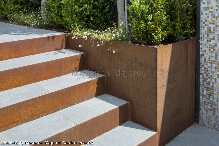 Porcelain tile steps with Cor-Ten steel risers, Buxus sempervirens cubes and Erigeron karvinskianus