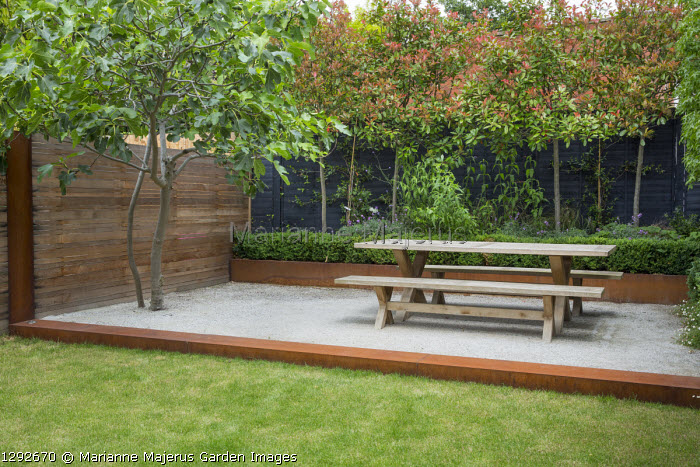 Wooden table and benches on Cedec gravel terrace, fig tree, Cor-Ten steel edging and raised bed, black painted fence, pleached photinia screen, cedar fence