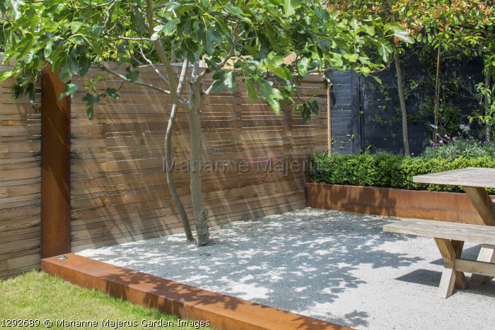 Fig tree on Cedec gravel terrace, contemporary cedar fence, Cor-Ten steel edging and raised bed