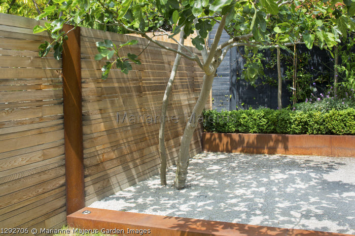 Cedar fence, fig tree, Cor-Ten steel edging and raised bed, black painted fence, Cedec gravel terrace
