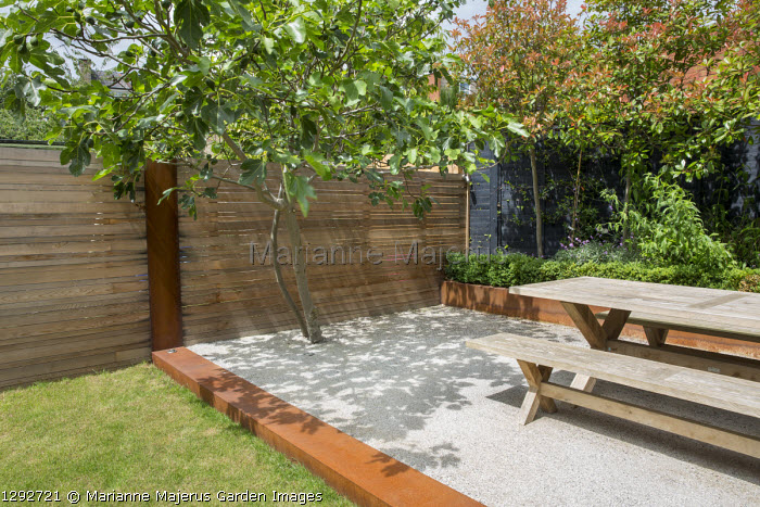 Wooden table and bench on Cedec gravel terrace, fig tree, Cor-Ten steel edging and raised bed, black painted fence, contemporary cedar fence, pleached photinia screen