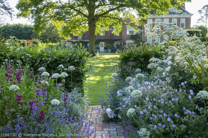 Allium nigrum, penstemon, Nepeta racemosa 'Walker's Low', Geranium pratense 'Mrs Kendall Clark', yew hedge, brick path, view to house