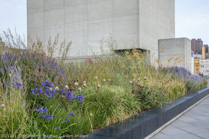 Built-in bench around raised bed, Agapanthus, Allium sphaerocephalon,, Stipa gigantea, Molinia caerulea subsp. caerulea 'Edith Dudszus'
