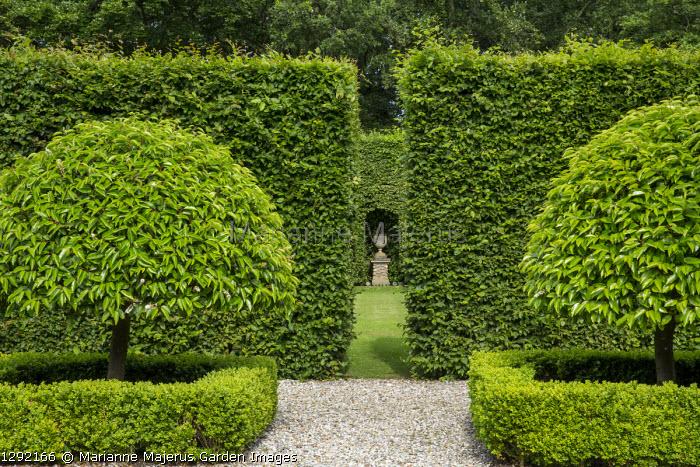 View through hornbeam hedges towards stone urn on plinth