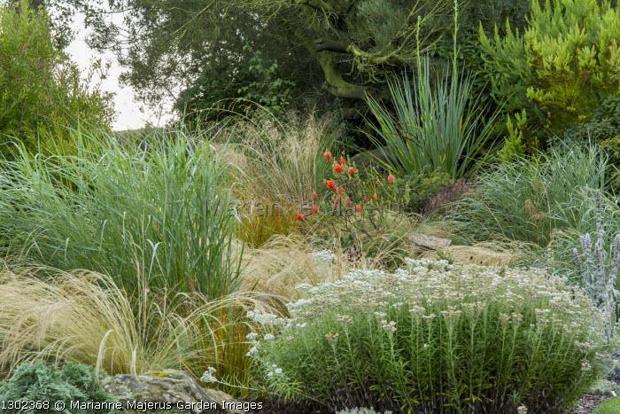 Grasses in dry garden, molinia, Stipa tenuissima, anaphalis, Eryngium yuccifolium